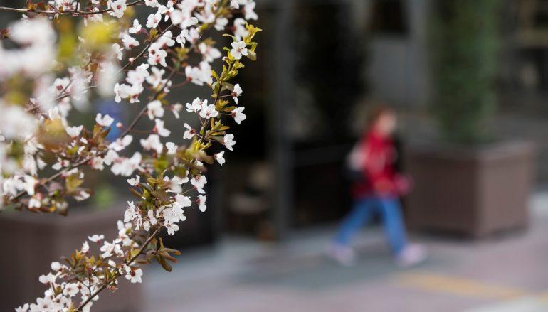 Bahar alerjisi mahvetmeden…